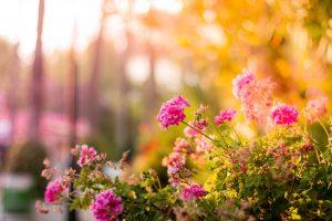 Jak mieć najpiękniejszy ogród